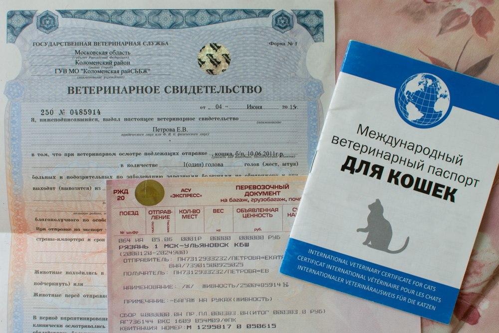 Кошачьи документы