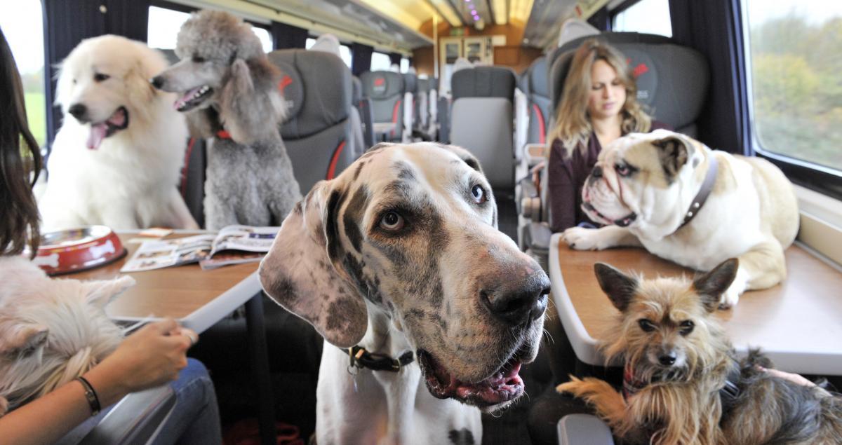 Собаки в поезде