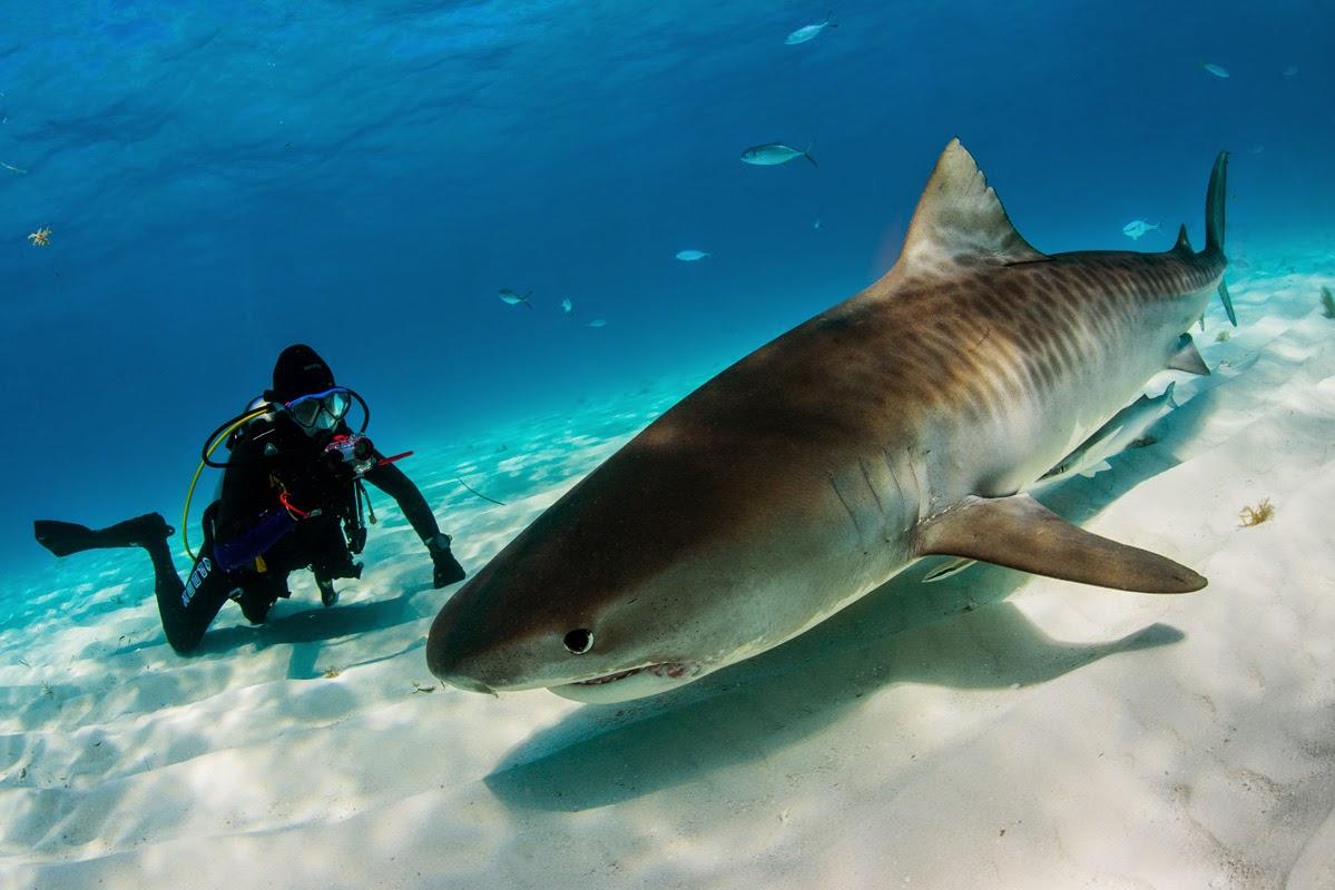 какие акулы водятся в средиземном море фото металлическая пластина надписью