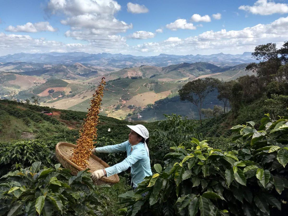 применяемых картинки с кофейными плантациями целом долина царей