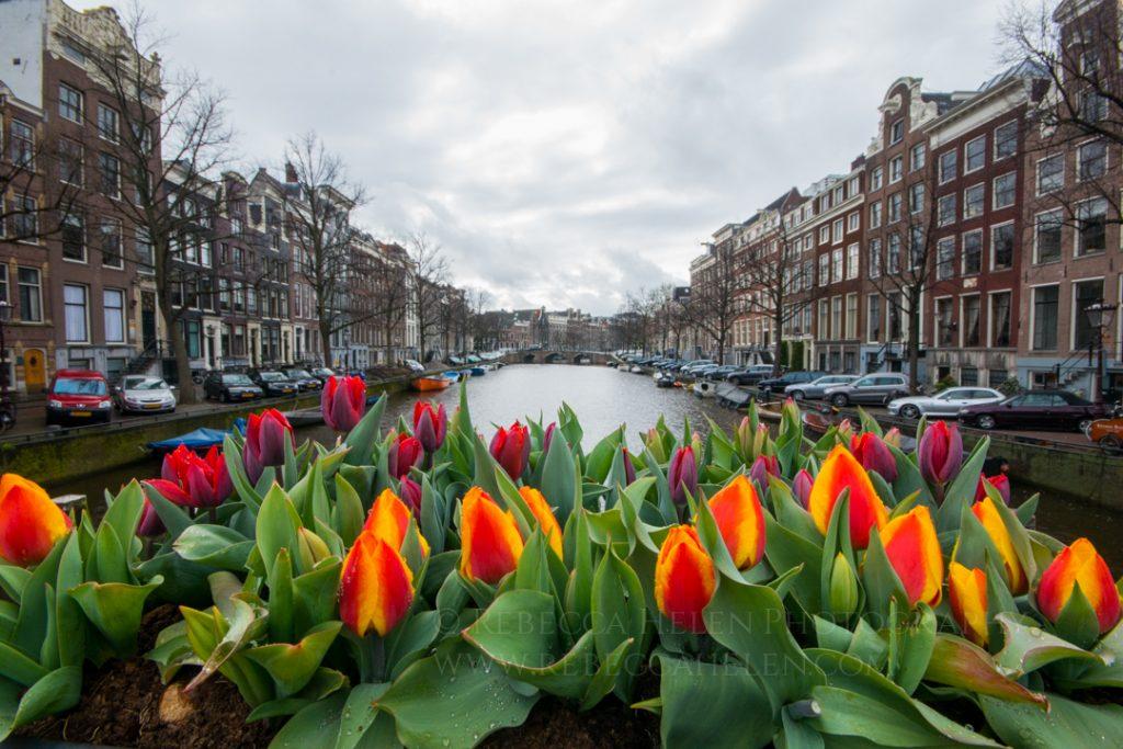 запомнить, что нидерланды апрель фото этого